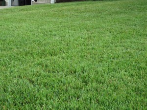 Prepare Your Home to Sell with A lush, well manicured lawn which increases curb appeal