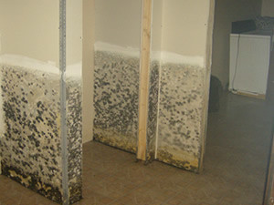 Fighting Mould
